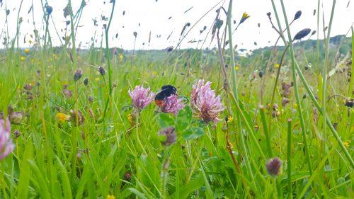 Steve Pollard meadow, North Bovey