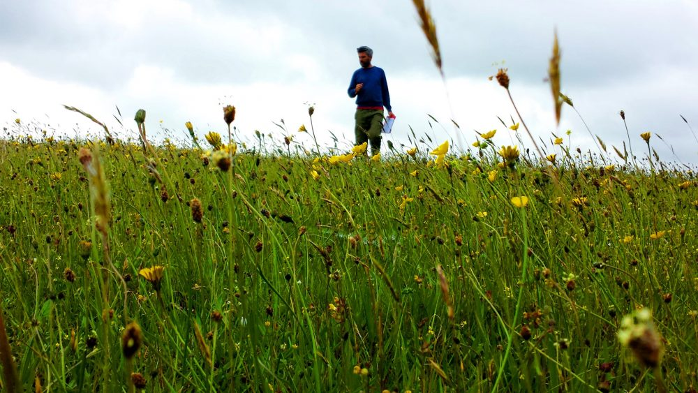 Steve Pollard in his meadow at North Bovey