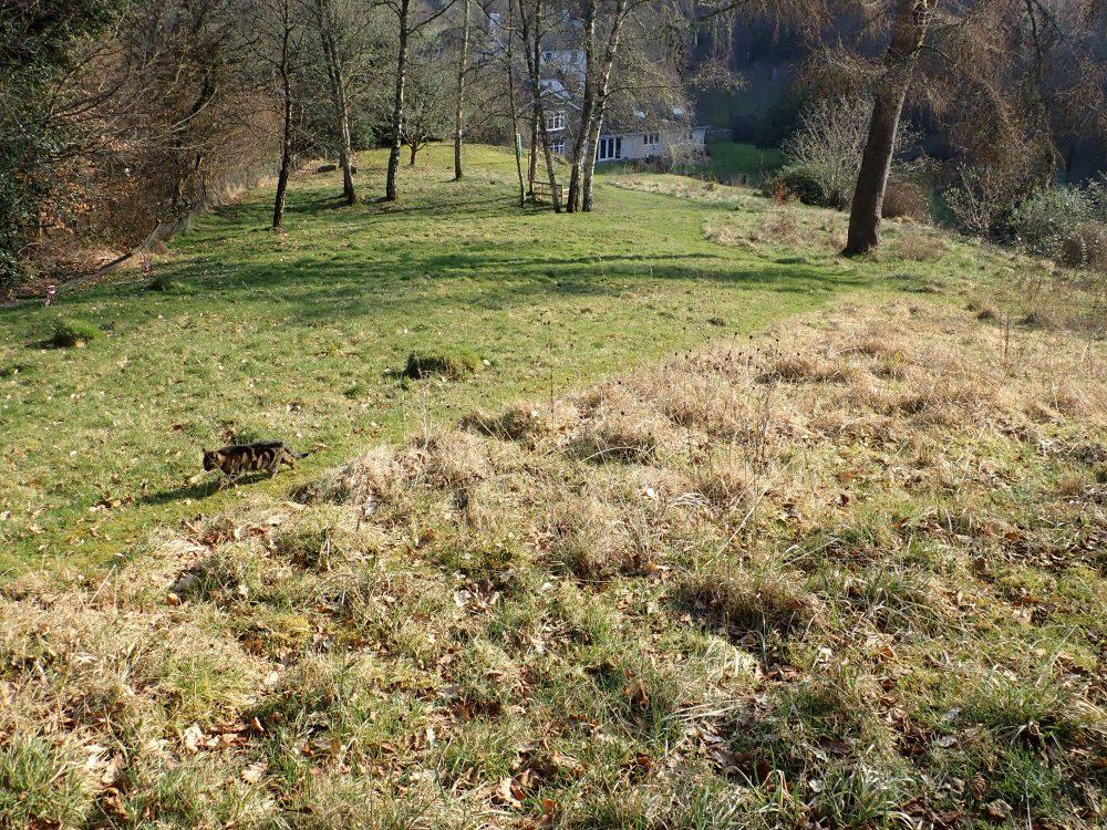 Bas and Rosemary Payne's meadow