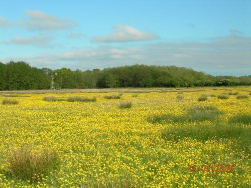 Wildflower meadow at Carrapitt Farm, Bridford
