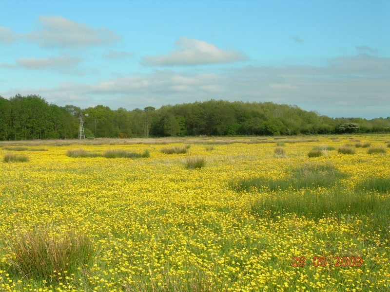 Wildflower meadow at Carrapitt Farm, Bridford