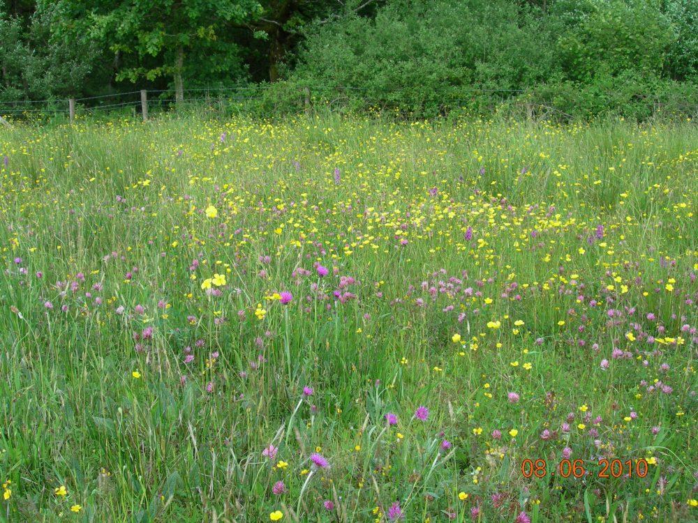 Meadow at Carrapitt Farm, Bridford