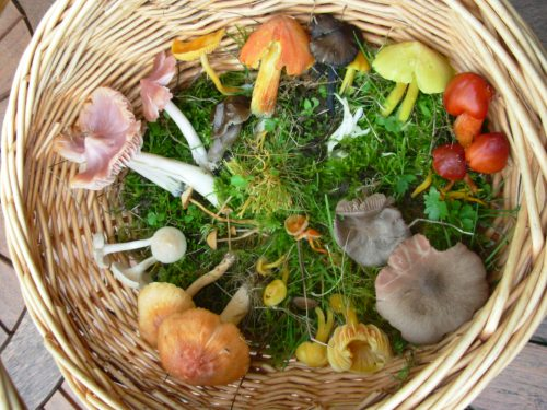 Fungi from Deer Park Farm