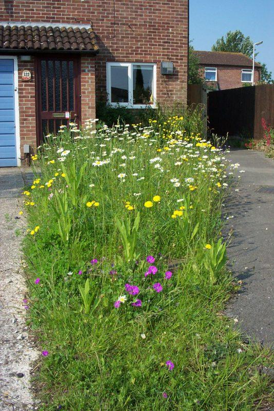 A front garden meadow