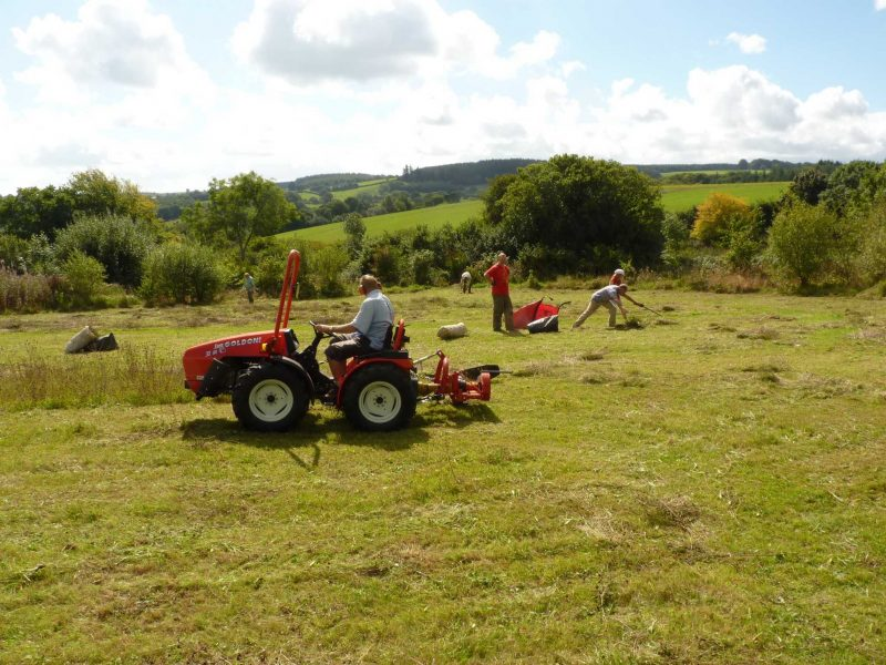 Haymaking at Bridford Trust haymeadow
