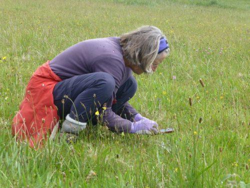 Jill Millar in the meadow at Pudsham