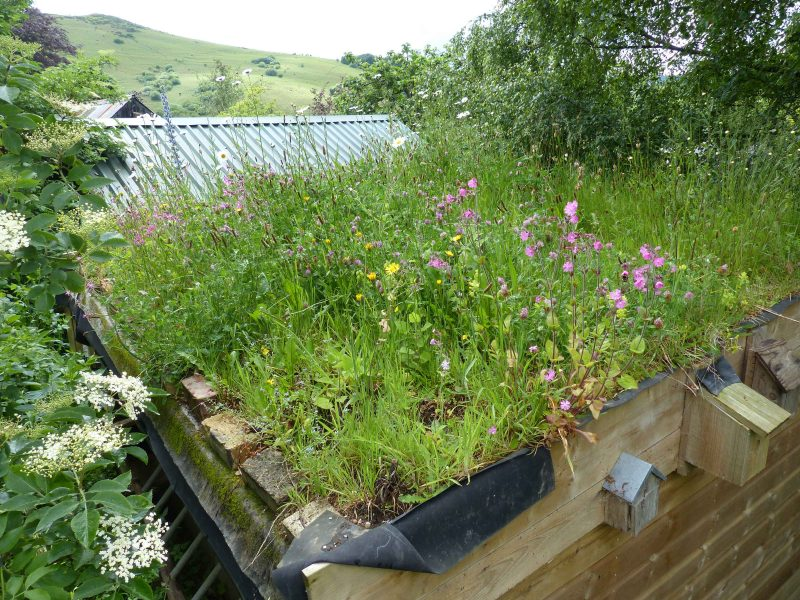 Nicky Scott's green roof, Chagford